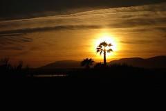 Palm tree on fire (KRAMEN) Tags: sunset almería puesta de sol