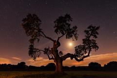 ENCINALUNA (Fernando Guerra Velasco) Tags: encina tree árbol luna moon largaexposición salamanca