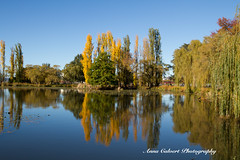 Autumn reflections (Anna Calvert Photography) Tags: australia canberra lakeburleygriffin travelphotography autumn autumncolours landscape landscapephotography nature trees water reflections poplartrees