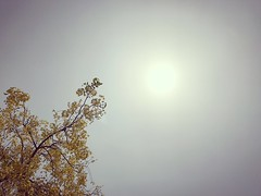 Millions of Years Ago a Rebellious Amaltas Flower Eloped into Space and Became the Sun (Mayank Austen Soofi) Tags: delhi walla summer millions years ago rebellious amaltas flower eloped space became sun
