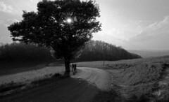 Nothing But A Dream (film) (miskin69) Tags: nikonf5 kodak tmax100 film rodinal r09 nikkor20 f5 20mm f18 bw monochrome blackandwhite nikon