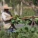 Tobacco farm, Viñales