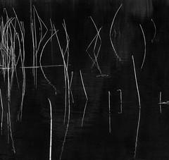 Etang (Be So) Tags: noiretblanc eau roseaux nature extérieur minimaliste graphique