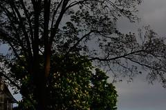 may noon tree house (fdfotografie) Tags: mai mittag baum haus may noon tree house himmel ausschnitt flora pflanze äste blätter blüten zweige muster bewölkt lichtstrahl sonnenstrahl outdoor tageslicht dslr farbfoto querformat halbsilhouette semisilhouette d7100