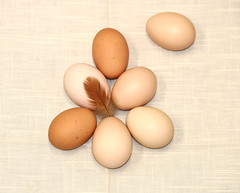 Farm Fresh Eggs (sgbrown56) Tags: nature food eggs stilllife seven farm fresh browneggs chicken chickeneggs feather chickenfeather arranged lightbrown beige napkin