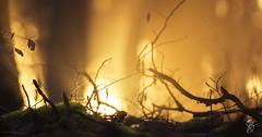 De feu et de glace (M x B) Tags: hiver feu glace gel winter fire ice canon 100d sigma 500mm golden hour