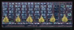Red Building, Glowing Trees (Ilan Shacham) Tags: architecture abstract pano panorama building tree glow fineart fineartphotography rotterdam lodewijkpincoffsweg windows repetition pattern cityscape view balcony graphic shape form netherlands