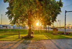Morning Bursts Through (kendoman26) Tags: tree sunrise sunburst morrisillinois morning nikon nikond7100 tokinaatx1228prodx tokina tokina1228 hdr nikhdrefexpro2