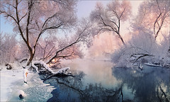 Christmas lace (Влад Соколовский) Tags: christmas lace winter landscape morning river frost outdoor sunlight tree cold snowy icy north white calm travel silence view holiday scenery frosty lake woods sun covered ice hoarfrost season pink forest climate cool reflection weather december beauty sunset sky scenic snow water branch nature frozen tranquil belarus europe