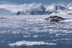 drift ice (Markus Trienke) Tags: grönland kulusuk kommuneqarfiksermersooq gl ammassalik fjord driftice ice cold sea coast winter greenland canon eos 5d mkiv mountain mountains eastgreenland landscape seascape nature reflection
