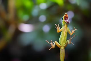 gecko on terrarium glass