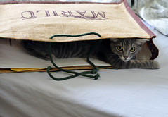 The cat in the bag (Ornella D. (ornedra)) Tags: ruby10 ruby15 ruby20