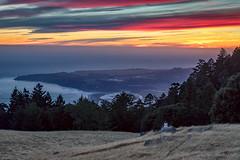 Tamalpais Evening (Kirk Lougheed) Tags: bolinasridge california marincounty mounttam mounttamalpais mounttamalpaisstatepark mttam mttamalpais tamalpais usa unitedstates forest landscape meadow outdoor sunset