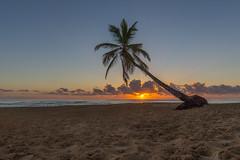 Dominican sunrise (Marc McDermott) Tags: dominicanrepublic tropical beach sunrise palm tree clouds beautiful morning calm ocean tranquil caribbean greater antilles
