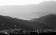 Sight Seeing (Rob G Ski) Tags: 50mmf17 blackandwhite blueridge dailyin glasses landscape nsps shenandoahnationalpark singlein skylinedrive spectacles