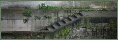 Quai de seine (Pi-F) Tags: escalier pierre végétation herbe folle sombre vert humide seine paris quai rive france