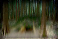 Down in the Woods (mik-shep) Tags: 365the2017edition day170365 day170 2017onephotoeachday abstract xt10 fujifilm 3652017 19jun17 woods trees motionblur cannwoods