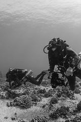 IMG_1120 (nealmoc) Tags: kona bigisland hawaii kailuakona underwater rebreather poseidon nobubbles underwaterphotography canon nauticamhousings