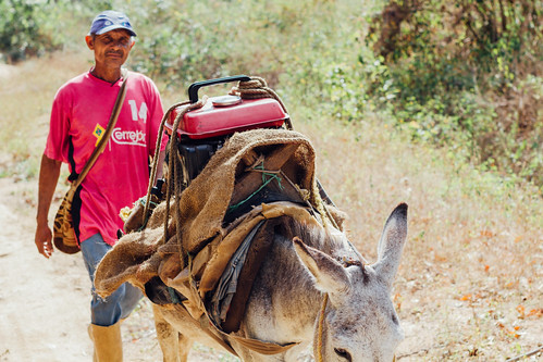 Farmer with Generator on Mule, Guadualito