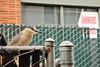 Urban Heron (J-Fish) Tags: blackcrownednightheron heron nycticoraxnycticorax bird oakland california d300s 1685mmvr 1685mmf3556gvr