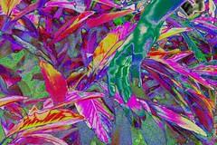 IMG_4033 (arthurpoti) Tags: glitch glitchart art artist artista vanguard databending brasilia ensaio model beautiful girl colourful color stoned lisergic lsd colour cores colorido impressionism unb universidadedebrasilia subjetividade