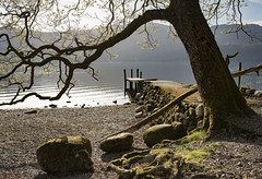 Jetty (Peter Henry Photography) Tags: tree water jetty lakedistrict cumbria derwentwater lake sunlight morning spring