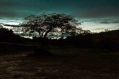 Entardecer azul no campo (Luiz Leite7) Tags: brilho luz vermelho azul branco estrelas horizonte mato plantas sombra contraluz amarelo chão céu nuvens clarão folhas campo escuro postes arvores cores sãopaulo brasil