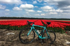 Cycling round May 7 (Klaas / KJGuch.com) Tags: bike bicycle cycling ciclismo bicicletta fiets fietsen wielrennen roadbike outandabout drenthe nederland netherlands nature landscape cloud cyclingphotography iwanttoridemybicycle cyclingaddict bianchi bianchisemprepro italianbicycles spring mayrides tulip tulips tulp tulpen flower flowers flowerfield tulipfield tulipfields bloemenveld bloemenvelden tulpenveld tulpenvelden