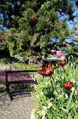 Lente in de Kruidtuin van Leuven (Kristel Van Loock) Tags: kruidtuin leuven louvain lovanio seemyleuven visitleuven atleuven vlaamsbrabant flanders flandre fiandre vlaanderen leuvensekruidtuin jardinbotanique jardinbotaniquedelouvain giardinobotanico jardinbotanico hortusbotanicuslovaniensis botanischergarten botanischetuin visitflanders visitflemishbrabant visitvlaamsbrabant visitvlaanderen visitbelgium belgium belgique belgien belgica belgië belgio lovaina botanicalgarden loveleuven toerismevlaanderen toerismevlaamsbrabant flemishbrabant brabantflamand brabantefiammingo leveninleuven drieduizend springtime primavera printemps lente2017 6may2017