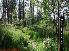 DSCF0962 (Okanagan Trail Running) Tags: okanagantrailrunning crawfordtrails kelownabc
