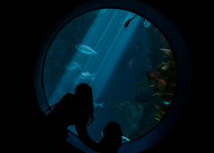 127/365: Fish (dharder9475) Tags: 127365 2017 365project aquarium blue brookfieldzoo candid child circle dark fish frombehind girl privpublic silhouette twopeople window woman