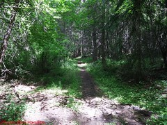 DSCF0944 (Okanagan Trail Running) Tags: okanagantrailrunning crawfordtrails kelownabc