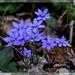 fiori_0156