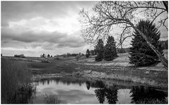 One of those days (Nogegg) Tags: alone away amateur nature warm dark darkness grass beautiful black dream spring summer sky dslr trees first forest countryside cold cloud rainy evening beginner tree time white lake pond water reflection grey gray bnw bw clouds blackandwhite
