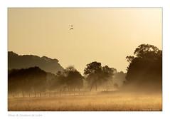(Bruno-photos2013) Tags: sunrise soleillevant paysage paysageligérien paysdeloire loireatlantique brume bretagne brouillard prairie contrejour p