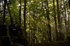 Against the darkness (matteo.buriola) Tags: friuli alpi carniche faggi bosco wood sella cereschiatis green light nikon d3100 landscape