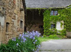 Vieille ferme - Aveyron (Cherryl.B) Tags: ferme batisse bâtiment pierres fleurs iris lierre végétation murs fenêtres