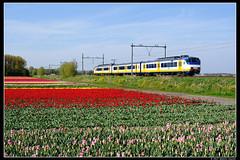NSR-2965_Hil_30042017 (Dennis Koster) Tags: ns nsr sgmm sgm trein personentrein passagierstrein 2965 bollen hillegom
