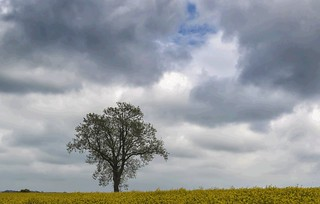 LONELY LITTLE TREE (EXPLORED #211 MAY 7TH 2017)