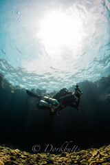 IMG_1155 (nealmoc) Tags: kona bigisland hawaii kailuakona underwater rebreather poseidon nobubbles underwaterphotography canon nauticamhousings