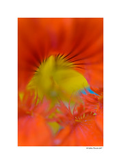 Abstraction (g.femenias) Tags: abstract abstration flower macro supermacro approximation details colour nature sonparrich bonany petra mallorca