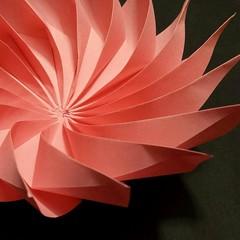 Gazania (Dasssa) Tags: origami paper modular square 16 flower gazania paperfolding dasa severova paperain pink