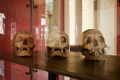 Skulls (jev55) Tags: nikon berlin germany museum neues history artifacts egypt ruin skulls human remains skeleton old stone ancient