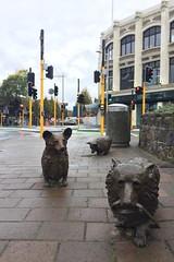 Entlaufene Hunde sind in Christchurch eine Attraktion - warum, wissen wir leider nicht.