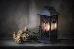 Farol con flores (JACRIS08) Tags: bodegon stilllife farol luz flores