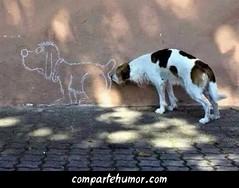 Animales (Comparte Humor) Tags: compartehumor humor playstore imagenes risas graciosas animales perro perros olfatear olfatea olfato oler huele olor mascota mascotas