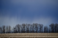 Gamble (faithroxy) Tags: field farm rural trees spring clouds rain storm weather alberta canada sky landscape tree blue
