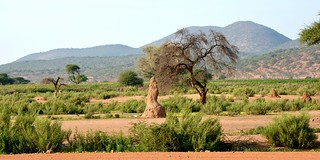 Travelling from Damaraland heading north - scene with Termite Hills -  a road in Kaokoland.