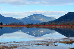BLUEBERRY BUSHES ON A FLOODED FIELD ON MATSQUI PRAIRIE NEAR ABBOTSFORD AREA,  BC. ( DEWDNEY MOUNTAIN IN THE BACKGROUND.) (vermillion$baby) Tags: fraservalley matsquiprairie blueberries deroche farm field flood mountain pasture reflections winter mountainf