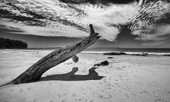 Sundial (Keith Midson) Tags: adventurebay tasmania brunyisland tree beach sand coast shoreline seascape clouds australia